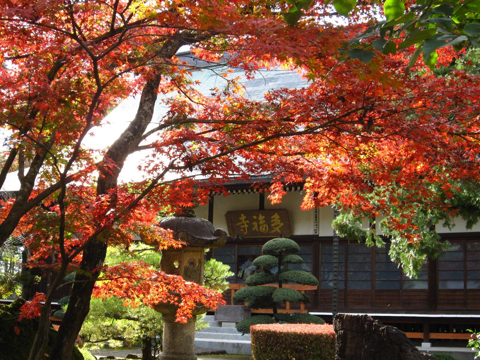多福寺(上富)